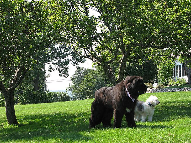 Bear & Alfie