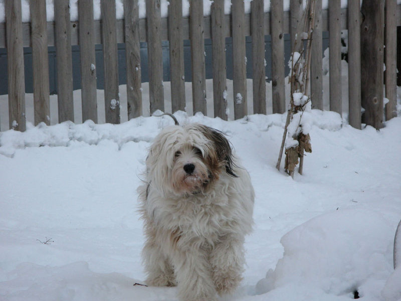 Alf in snow