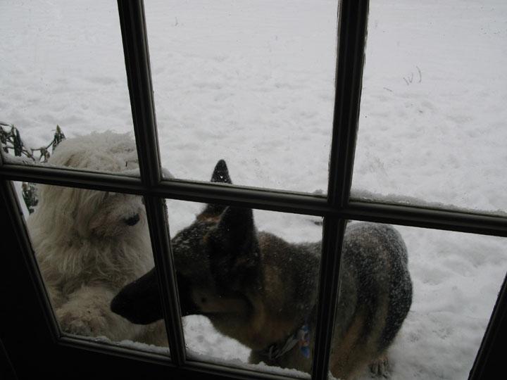 Alf & Soph