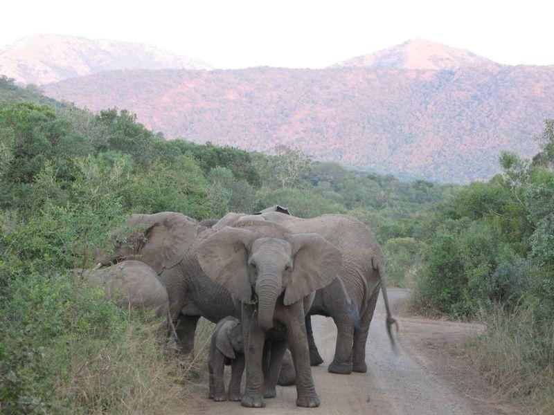 Elephants 7