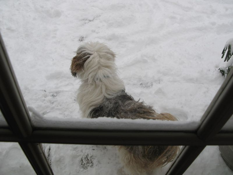 Alf snow 12:09