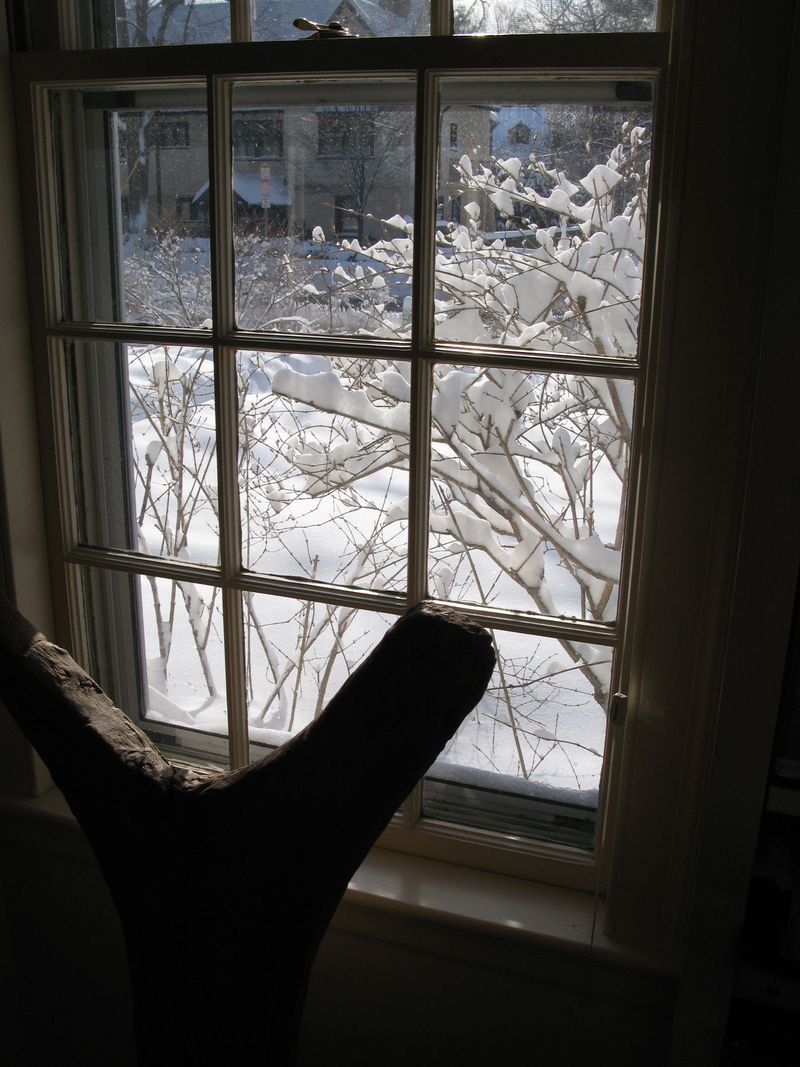 Window 1:11