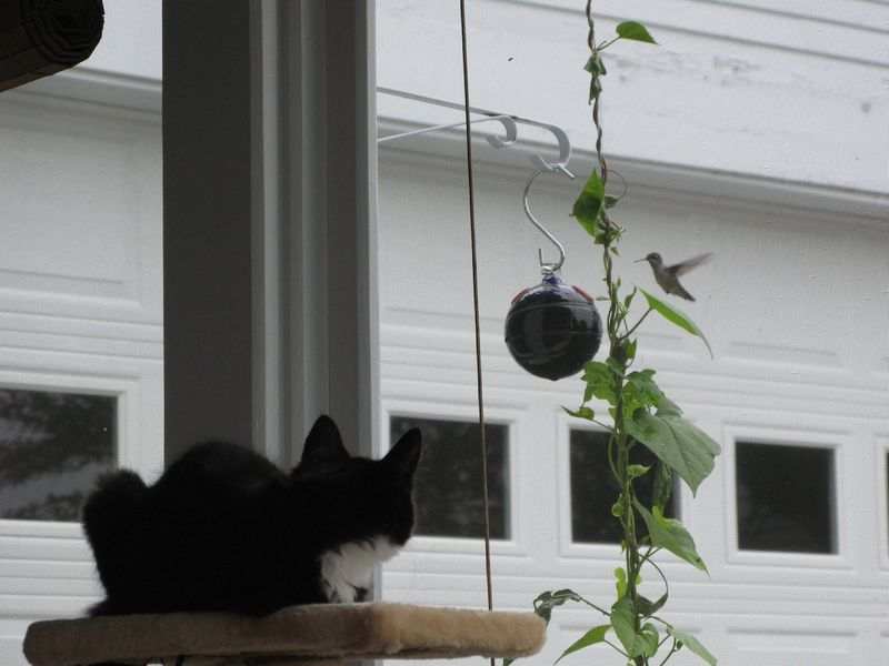 Lulu and hummingbird