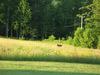 Deer_73