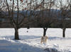 Alfie_snow