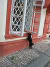 Dog_window