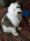 Whos_my_puppi